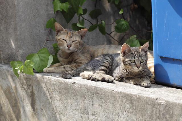 子猫の傍らで微笑むお母さん