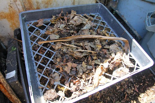 Sifting Unfinsihed Compost