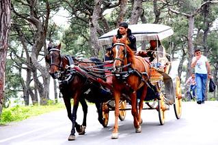A Horse Cart, Buyukada, Istanbul