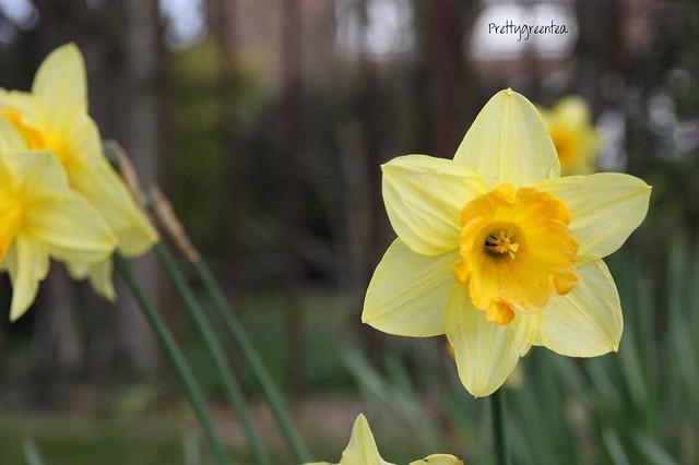 Prettygreentea flower