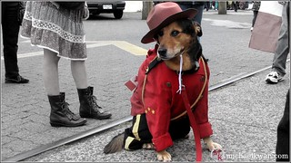 Canadian Mountie Dog