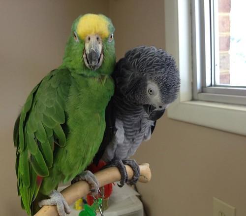 When Your Parrot Flies Away…