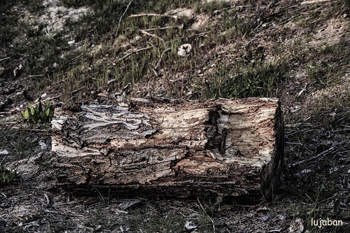 Old wood by lujaban