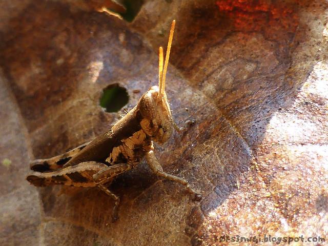 Kaeng Nyui Bike Trip Grasshopper 1