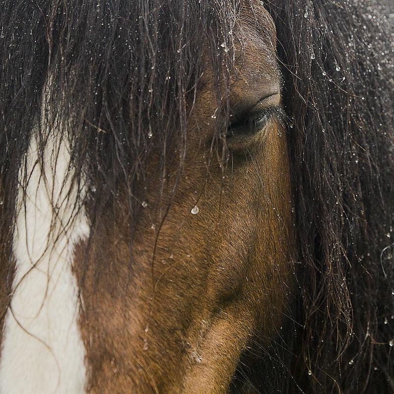 Rain Horse Eye