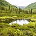 Reflection Pond  DROH Winner by jkirkhart35