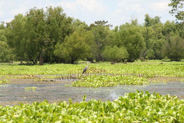 Atchafalaya Basin, Henderson Swamp