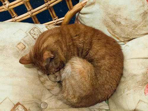 1000/765: 25 March 2012: Curled up kitty by nmonckton