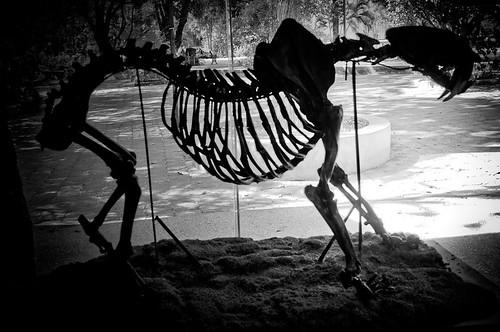 Museo de Paleontología (24)