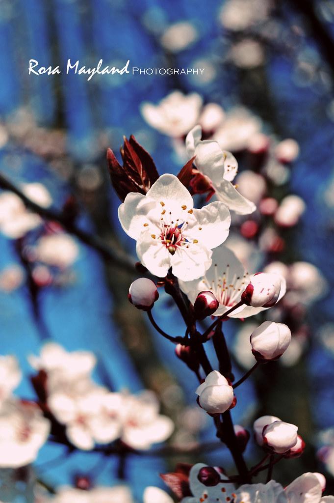 Spring Flowers 2 7 bis