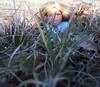Brigett for CuteKiwi1's bntm Photo 1 Fairytales Alice in wonderland Option 5 of 5 by ღ♬☂☮♫♪ Rainbowcute100™♣♦☮☼