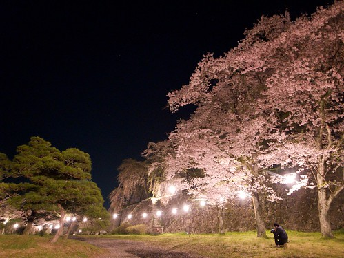 Youth to shoot the cherry blossoms at night