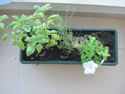 Garden Update 1
