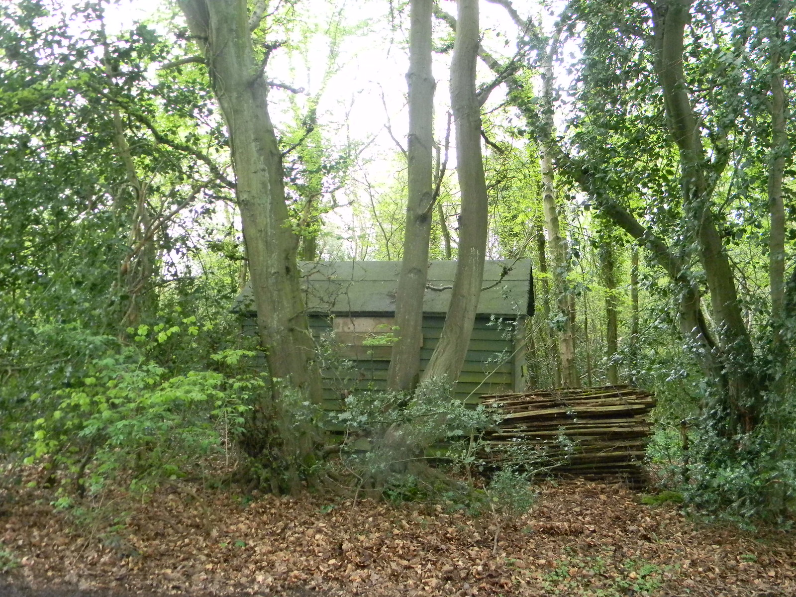 Shed in the woods Wendover Circular via Lee