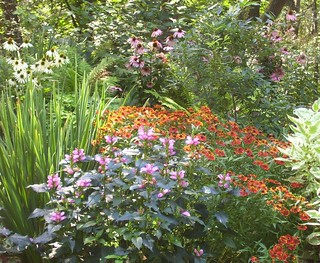 Turtehead_and_coneflower_color-up_rain garden_9-9-8_PAL