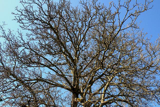 Bare Spring Tree