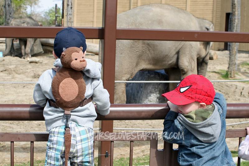 Zoo Trip May 2012