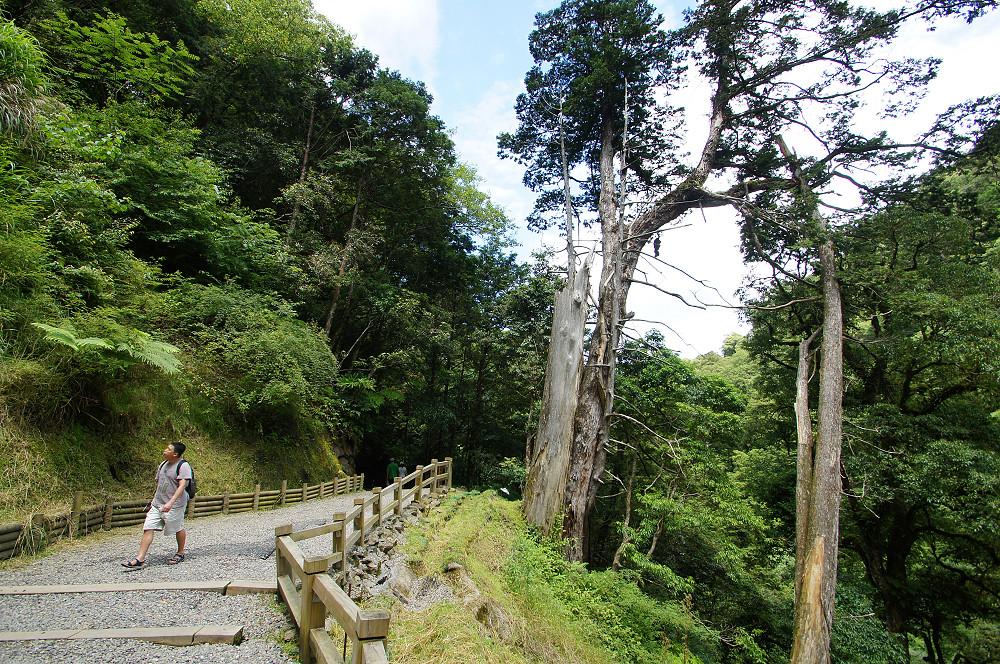 巨木群,與往拉拉山的路上-022