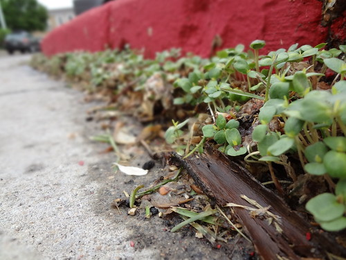2012.05_curb sprouts