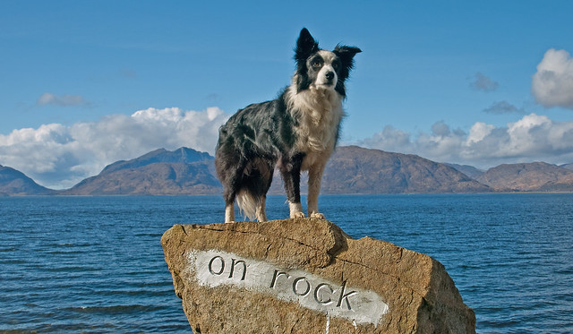 collies rock