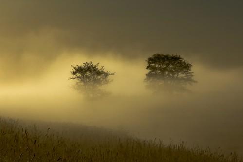 mist dutch fog landscape alblasserwaard