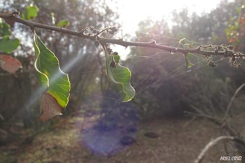 365-72 | Bosque El Panul - El Panul Forest (Santiago) | Favor - Please