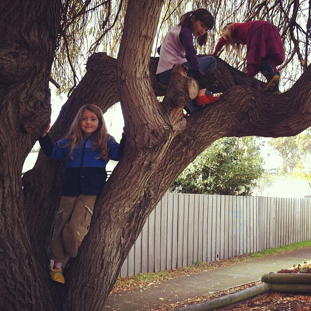 Up the tree at Co-op today #tree #unschooling