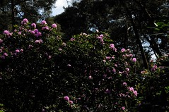 Rhododendronpark (36)