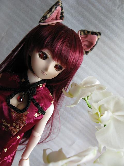DD & Orchid