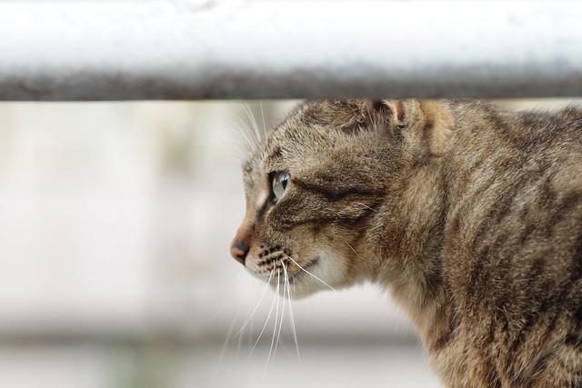 横目で見る猫 1