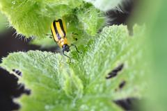 bugs 159