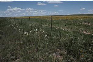 Fenceline contrast of native and overgrazed shortgrass prairie