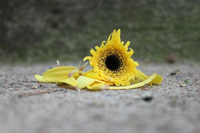 Flower moment...