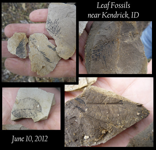fossils!