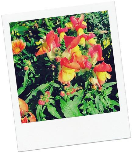 PT-Flowers3