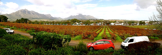 Wine Vineyards, SA