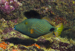 Diving with South Pacific Adventure Divers on Fiji's Coral Coast