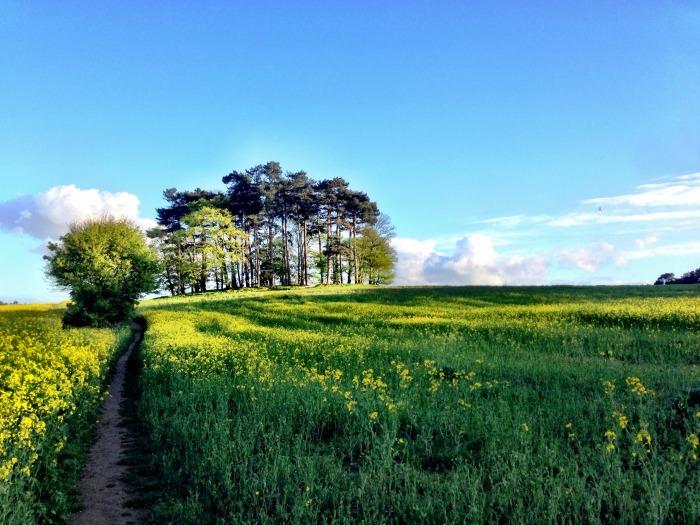 rapeseed-fields-spring