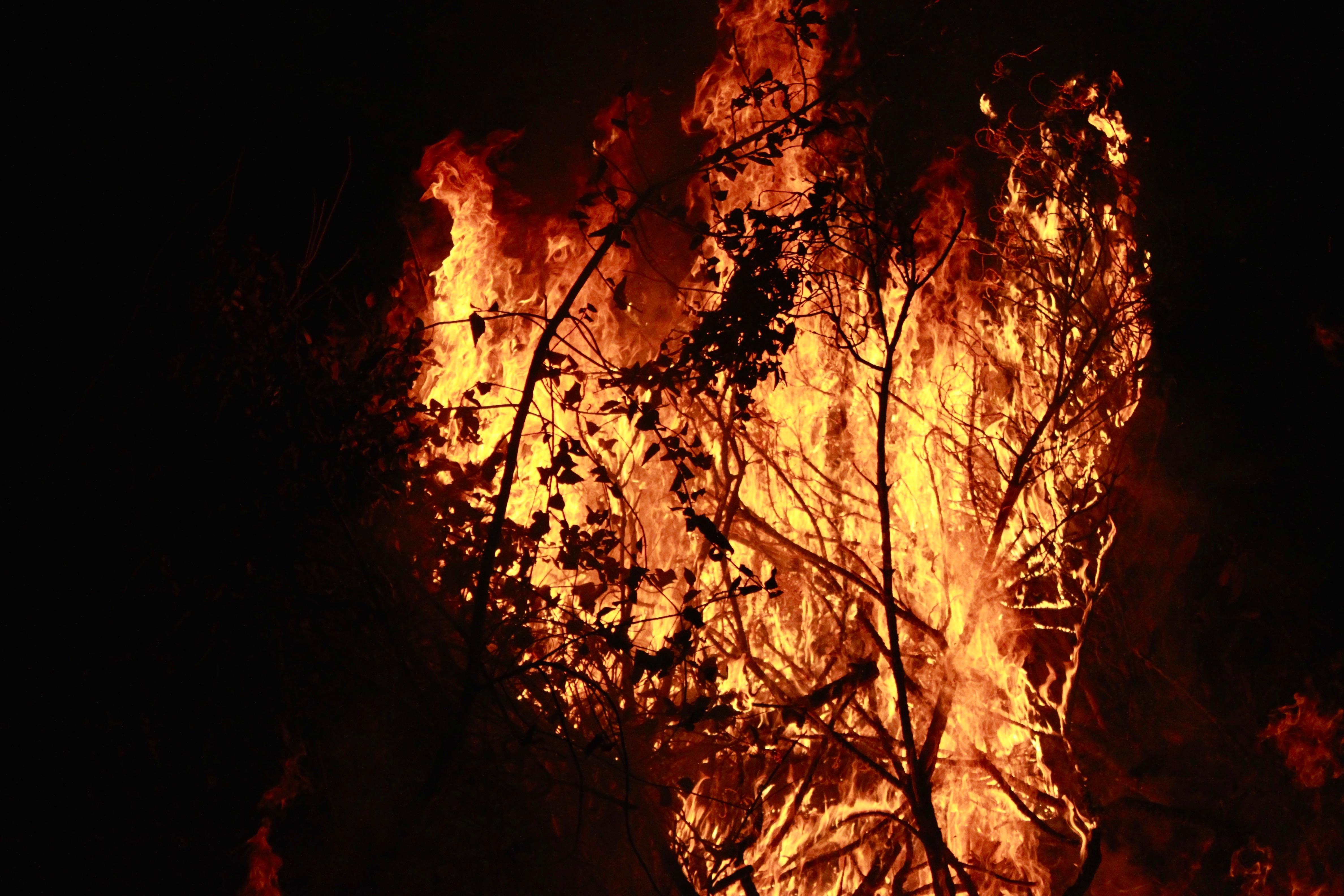 Nature photography challenge   Fire   www.hannahemilylane.com