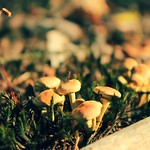 Little mushrooms