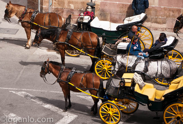Horses and carriages in Malaga, Spain