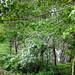αναχώματα 24-04-2012 043.jpg