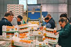 Consorzio del Mandarino (Palerme)