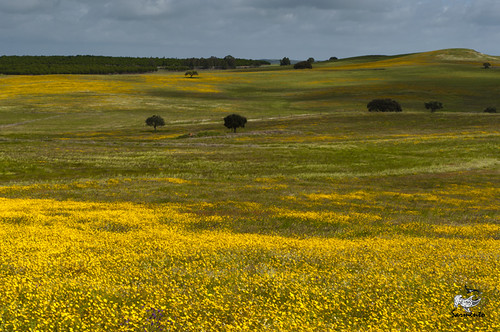 Primavera alentejana by Luis G. Sarmento