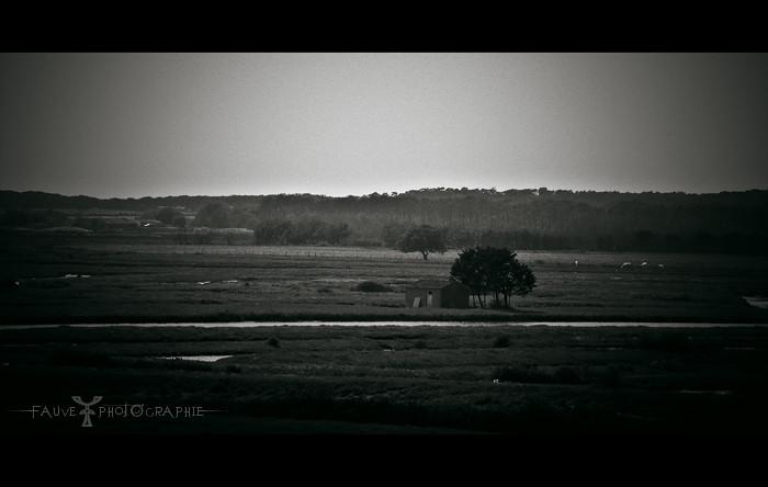 [PHOTO] Le Bayou Vendéen en noir et blanc