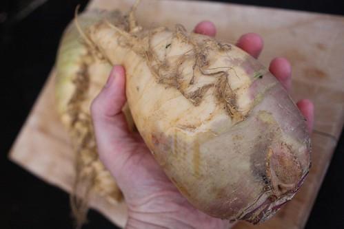 Rutabaga in Hand