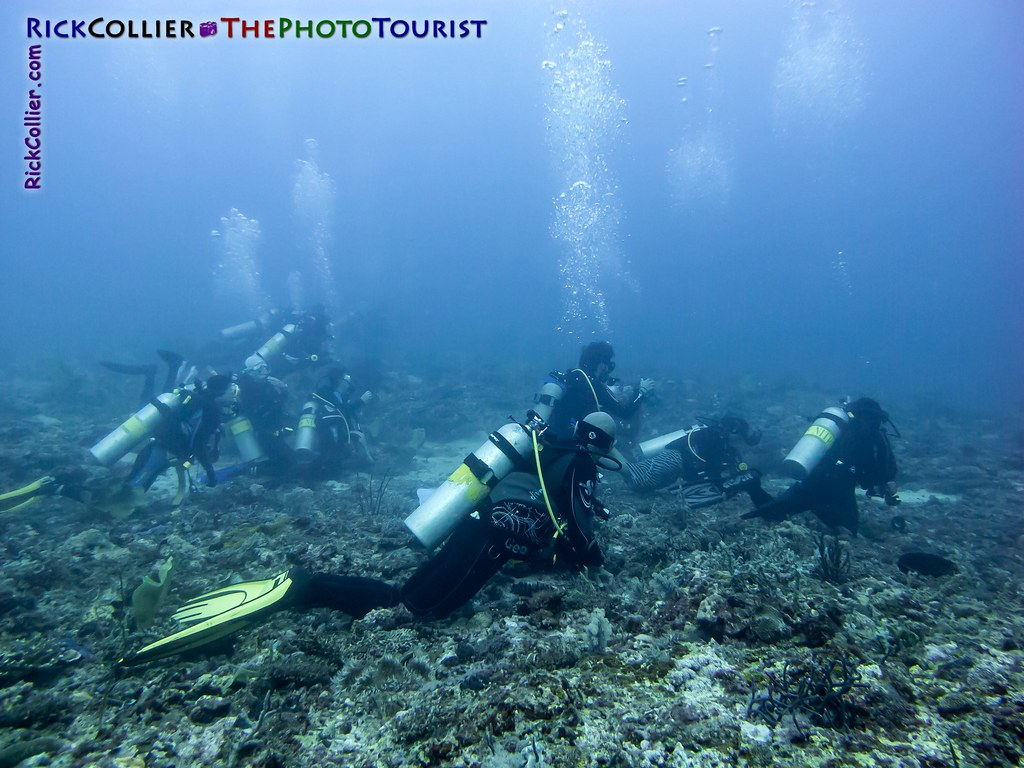 Divers hoping for a thresher shark encounter at Monad Shoal, near Malapascua Island, the Philippines