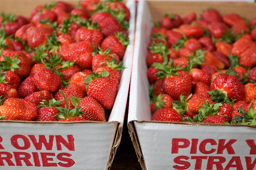 Mountains of strawberries