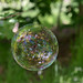 Forest Bubble