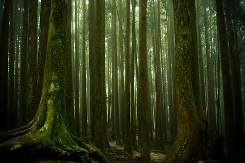 Forests of Alishan-6